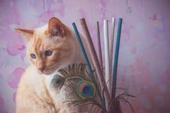 Γάτα με τα φτερά peacock Στοκ εικόνα με δικαίωμα ελεύθερης χρήσης
