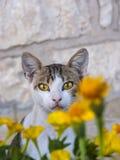 Γάτα με τα φωτεινά κίτρινα μάτια Στοκ Φωτογραφίες
