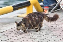 Γάτα με τα ψάρια στο στόμα Στοκ Εικόνες