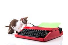 Γάτα με τη γραφομηχανή Στοκ εικόνα με δικαίωμα ελεύθερης χρήσης
