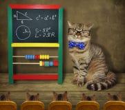 Γάτα με τους σπουδαστές του 2 στοκ εικόνες με δικαίωμα ελεύθερης χρήσης