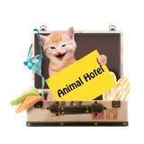 Γάτα με το ζωικό ξενοδοχείο αφισών Στοκ Εικόνα