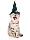 γάτα με το καπέλο για αποκριέση η ανασκόπηση απομόνωσε το λευκό Στοκ Εικόνα