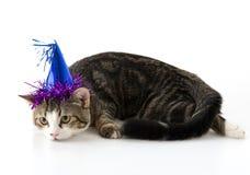 γάτα με το καπέλο κομμάτων στοκ φωτογραφία