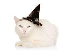 Γάτα με το καπέλο μαγισσών για αποκριές Στην άσπρη ανασκόπηση Στοκ Εικόνες
