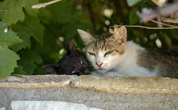 Γάτα με το κουτάβι κάτω από τα φύλλα στοκ εικόνες