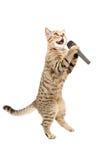 Γάτα με το μικρόφωνο Στοκ Φωτογραφία