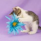 Γάτα με το παιχνίδι στοκ φωτογραφία με δικαίωμα ελεύθερης χρήσης