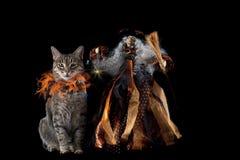 Γάτα με το περιλαίμιο αποκριών δίπλα στη χαμογελώντας μάγισσα Στοκ Φωτογραφία