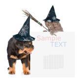 Γάτα με το ραβδί σκουπών μαγισσών και σκυλί με τα καπέλα για αποκριές που κρυφοκοιτάζουν από πίσω από τον κενό πίνακα Απομονωμένο Στοκ φωτογραφία με δικαίωμα ελεύθερης χρήσης
