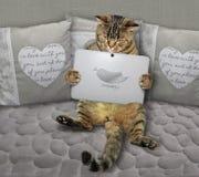 Γάτα με το σημειωματάριο σε έναν γκρίζο καναπέ στοκ φωτογραφία