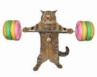 Γάτα με doughnut barbell στοκ εικόνες