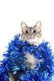 Γάτα με tinsel που απομονώνεται στο άσπρο υπόβαθρο Στοκ Φωτογραφίες