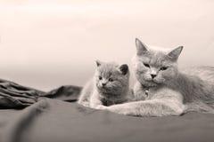 Γάτα μητέρων με τα γατάκια σε ένα μαύρο υπόβαθρο Στοκ φωτογραφίες με δικαίωμα ελεύθερης χρήσης