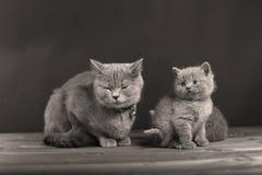 Γάτα μητέρων με τα γατάκια σε ένα μαύρο υπόβαθρο Στοκ φωτογραφία με δικαίωμα ελεύθερης χρήσης