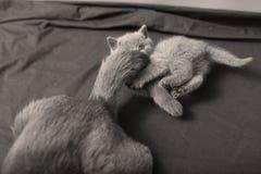 Γάτα μητέρων με τα γατάκια σε ένα ξύλινο υπόβαθρο Στοκ φωτογραφία με δικαίωμα ελεύθερης χρήσης