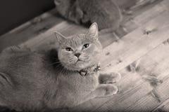 Γάτα μητέρων με τα γατάκια σε ένα ξύλινο υπόβαθρο Στοκ φωτογραφίες με δικαίωμα ελεύθερης χρήσης