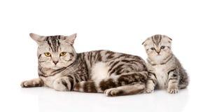 Γάτα μητέρων με το γατάκι η ανασκόπηση απομόνωσε το λευκό Στοκ φωτογραφίες με δικαίωμα ελεύθερης χρήσης