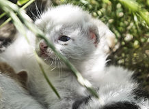 γάτα μικρή Στοκ φωτογραφία με δικαίωμα ελεύθερης χρήσης