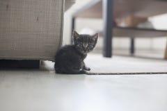 γάτα μικρή Στοκ Φωτογραφία