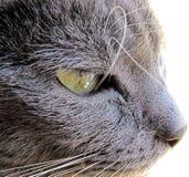 γάτα μισοκοιμισμένη Στοκ φωτογραφία με δικαίωμα ελεύθερης χρήσης