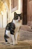 Γάτα μοναστηριού Στοκ εικόνα με δικαίωμα ελεύθερης χρήσης