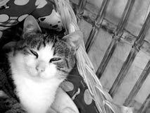 γάτα μου Στοκ εικόνα με δικαίωμα ελεύθερης χρήσης