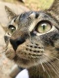 γάτα μου Στοκ φωτογραφία με δικαίωμα ελεύθερης χρήσης