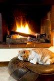 Γάτα μπροστά από την εστία Στοκ Εικόνες