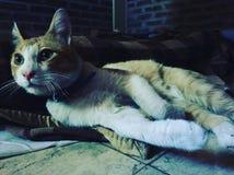 Γάτα μυστηρίου στοκ φωτογραφία με δικαίωμα ελεύθερης χρήσης