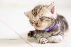 Γάτα μωρών Στοκ φωτογραφία με δικαίωμα ελεύθερης χρήσης
