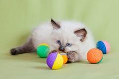Γάτα μωρών Στοκ Εικόνες