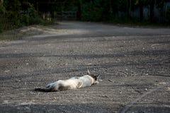 γάτα μόνη Στοκ Φωτογραφίες