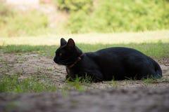 γάτα μόνη Στοκ Φωτογραφία