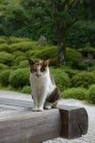 Γάτα ναών Konpuku-konpuku-ji - Κιότο Στοκ Εικόνα