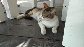 Γάτα νησιών στοκ φωτογραφία με δικαίωμα ελεύθερης χρήσης