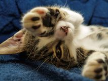 γάτα νυσταλέα Στοκ εικόνες με δικαίωμα ελεύθερης χρήσης