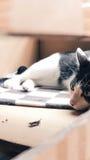 Γάτα νυσταλέα στο κιβώτιο εγγράφου Στοκ εικόνες με δικαίωμα ελεύθερης χρήσης