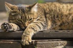 Γάτα οδών που στηρίζεται στην πόρτα που κλείνει τον υπόνομο στοκ εικόνες
