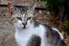 Γάτα οδών υπαίθρια Στοκ φωτογραφία με δικαίωμα ελεύθερης χρήσης