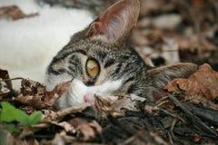 γάτα οκνηρή Στοκ εικόνες με δικαίωμα ελεύθερης χρήσης