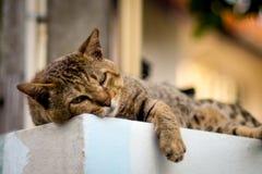 γάτα οκνηρή Στοκ εικόνα με δικαίωμα ελεύθερης χρήσης