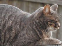 γάτα οκνηρή στοκ φωτογραφίες