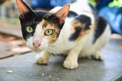 Γάτα οδών Στοκ Φωτογραφίες