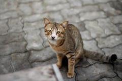 Γάτα οδών Στοκ Φωτογραφία