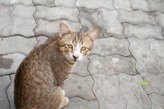 Γάτα οδών Στοκ φωτογραφία με δικαίωμα ελεύθερης χρήσης