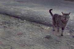 Γάτα οδών Στοκ φωτογραφίες με δικαίωμα ελεύθερης χρήσης