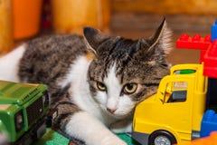 Γάτα - παιχνίδια κατοικίδιων ζώων χαλαρώνοντας Στοκ εικόνα με δικαίωμα ελεύθερης χρήσης