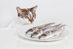 γάτα πεινασμένη Στοκ Εικόνες