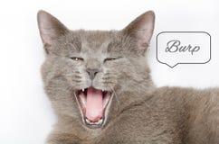 γάτα πεινασμένη Στοκ Φωτογραφία